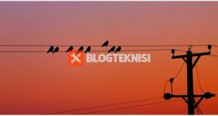 burung bertengger di kabel listrik